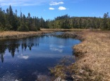 Finding forested wetlands