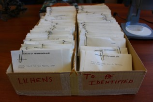 Big box 'o specimens (photo by Travis)