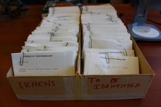 Big box 'o specimens (photo by Travis)