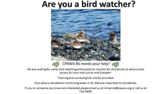 shorebirds ad