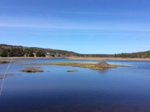 What a nice day in Newfoundland looks like