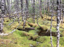 Swamps are the focus of this proejct